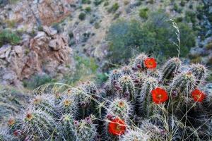 Tucson (6)