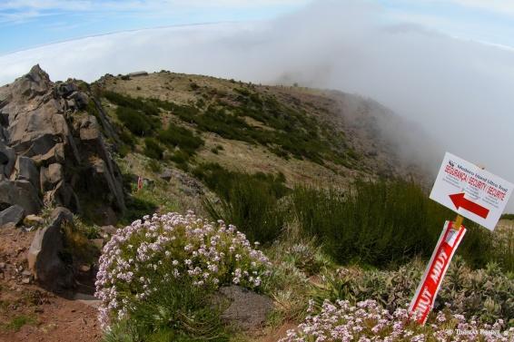Pico Ariero