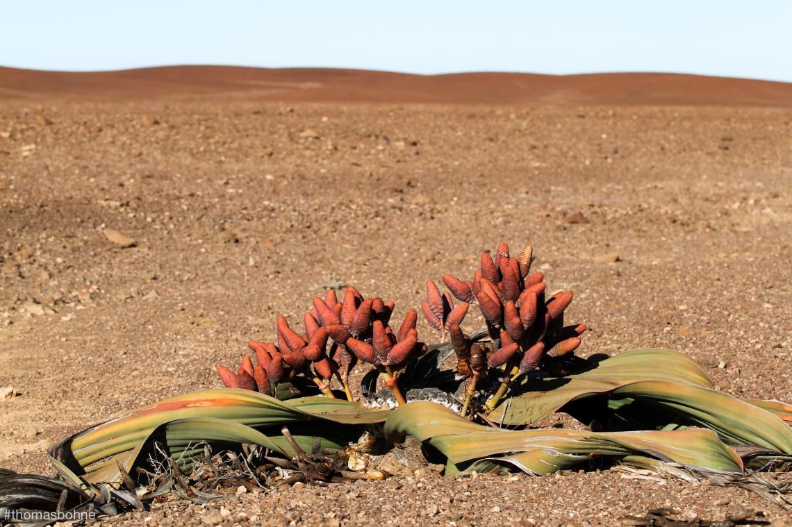 Namibia 2019-3013