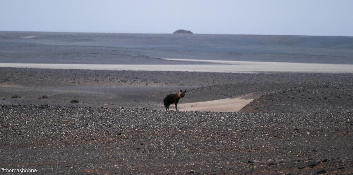Namibia 2019-3112