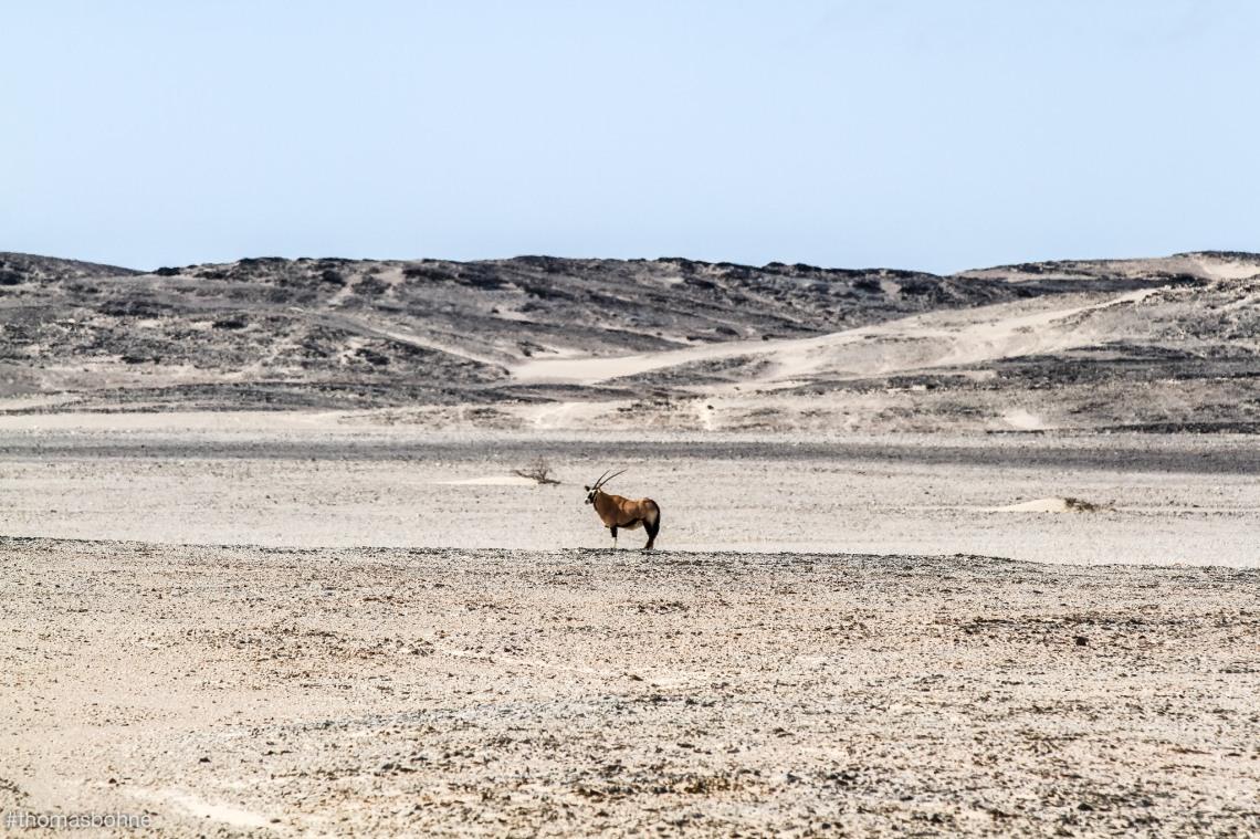 Namibia 2019-3119